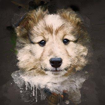 Dog, Puppy, Pup, Shetland Sheepdog, Mascot, Animal