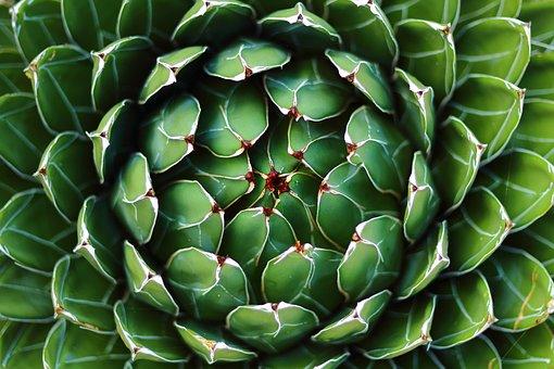 Agave, Geometric, Plant, Succulent
