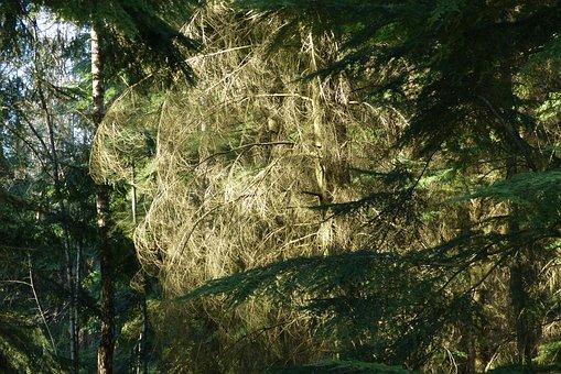Forest, Trees, Nature, Landscape, Light, Hiking