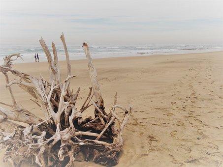 Beach, Sea, Driftwood, Ocean, Summer, Sand, Seascape