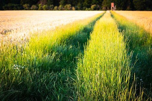 Dormagen, Gohr, Fields, Nature, Field, Delight, Meadow