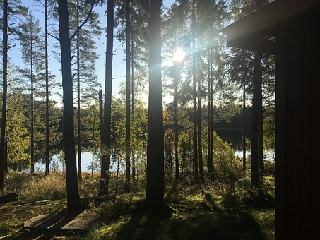 Nature, Reserve, Glaskogen, Värmland, Forest, Lake