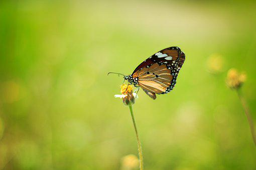 Butterfly, Summer, Nature, Butterflies, Flower, Bloom