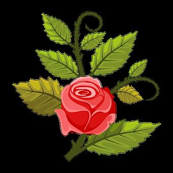 Illustration, Rosa, Flower, Leaves, Green, Red