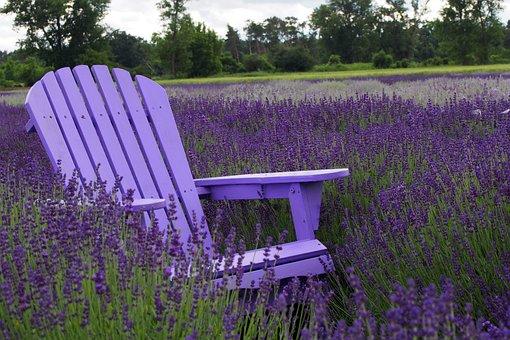 Purple, Lavender, Slovakia, Aromatic, Herbs