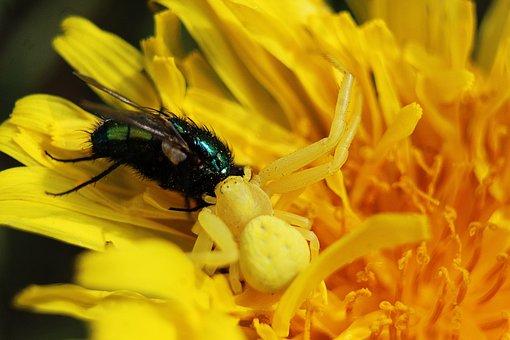 Nature, Plants, Flowers, Yellow