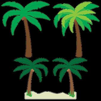 Palm Trees, Trees, Palm Tree Vector, Tropical, Beach