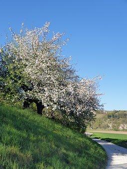 Tree, Nature, Flowers, Spring, Idyll, Bud
