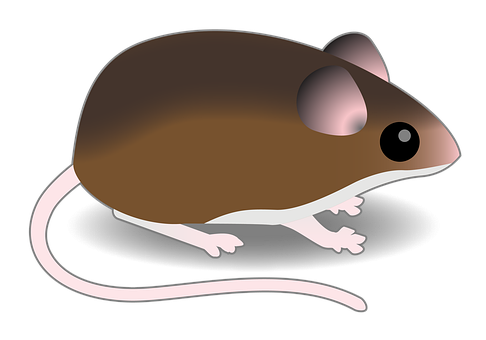 Brown Mouse, Mouse, Connectedbio, Deer Mouse