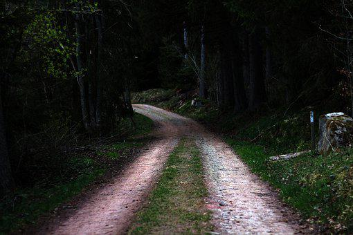 Road, Forest Road, Nature, Green, Street, Forest