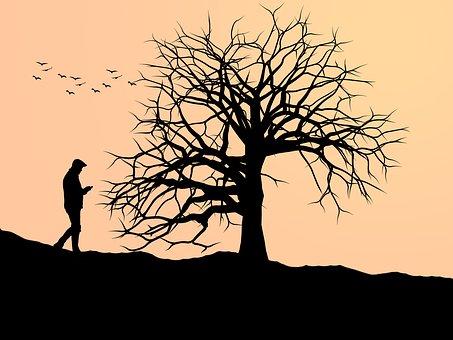 Tree, Silhouette, Nature, Sunset