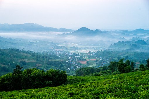 Tea, Clouds, The Hill, Town, Mountain, Dawn, Tea Tree