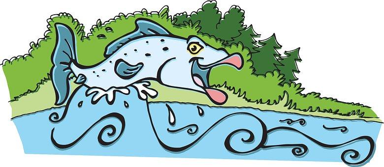 Atlantic Salmon, Fish, Jumping, Water, River, Outdoor