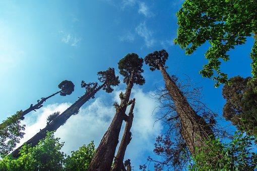 Sky, Trees, Nature, Landscape, Forest