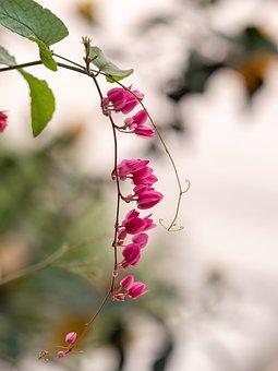 Orchid Flower, Green, Leaf, Beautiful