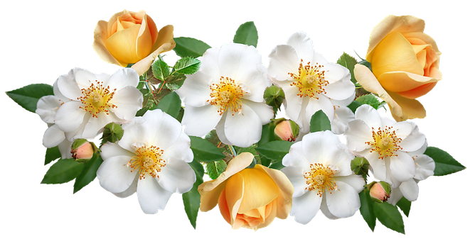 Flowers, Roses, White, Yellow, Blooms