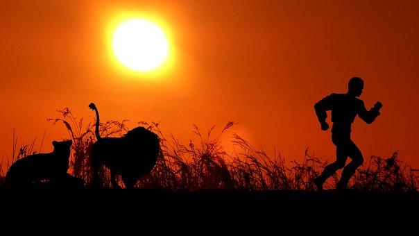 Sunset, Lion, Lioness, Man, Leak, Twilight, Nature