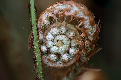 Fern, Unroll, Growth, Unfold, Plant