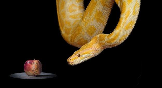 Snake, Apple, Paradise, Eve, Bible, Forbidden Fruit