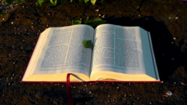 Bible, Holy, Book, Christianity, Christian, God's Words