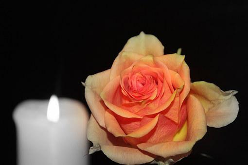 Rose, Blossom, Bloom, Rose Bloom, Orange, Candle