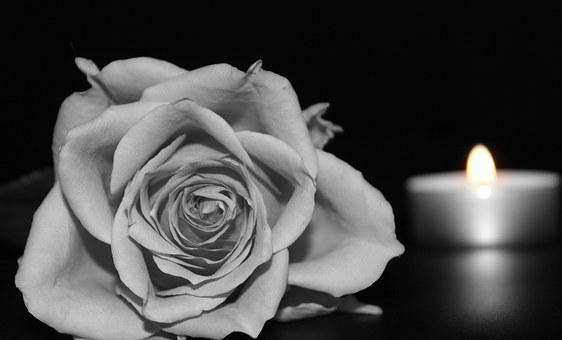 Rose, Blossom, Bloom, Rose Bloom, Black And White