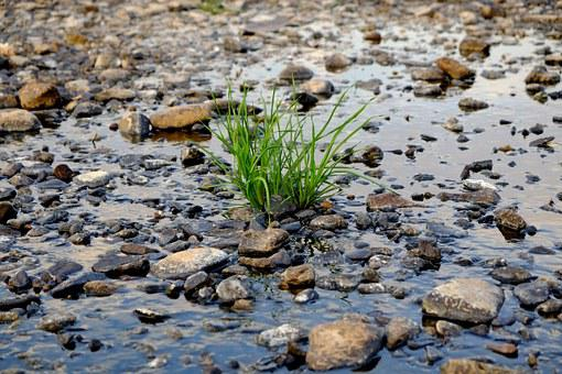 Green Plant, River, Water, Bank, Fluent, Waters, Nature