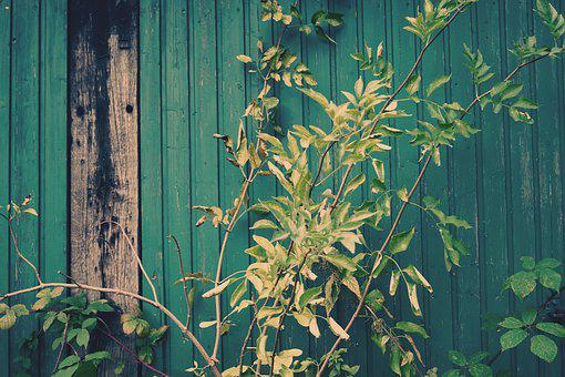 Green, Leaves, Wall, Wood, Wooden Wall, Plant, Barn