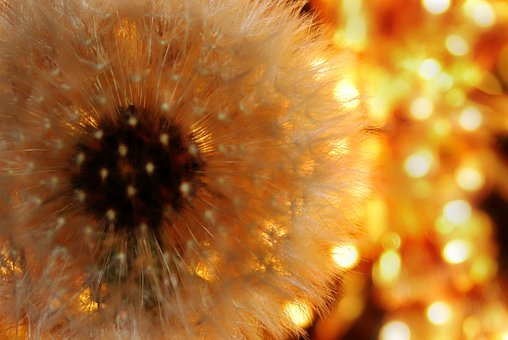 Dandelion, Nature, Screen, Light, Freedom, Strong