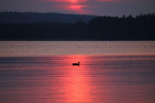 Sunset, Lake, Finnish, Summer, Water, Sky, Duck, Nature