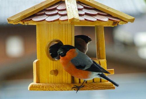 Bullfinch, Gimpel, Bird, Songbird, Nature, Male