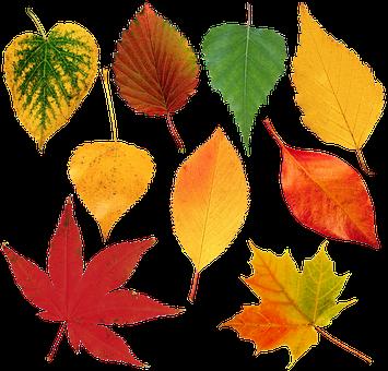 Leaves, Sheet, Autumn, Nature, Flora