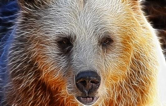 Bear, Face, Portrait, Syrian, Image Editing, Sharpness