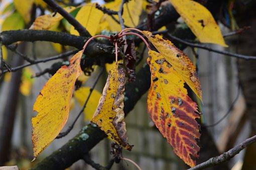Autumn, Leaves, Nature, Tree, Colorful