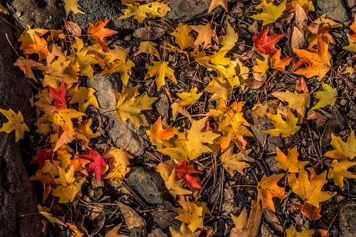 Autumn, Leaves, Forest, Nature, Tree