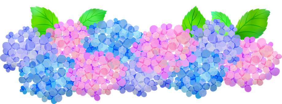 Hydrangeas Clip Art, Floral, Pink And Purple Hydrangeas