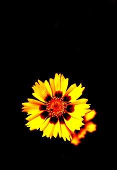 Dark, Black, Night, Color, Yellow, Flower