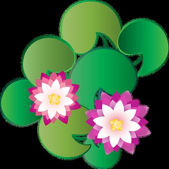 Graphic, Lotus, Kashmir, Flower, Water, Dal Lake