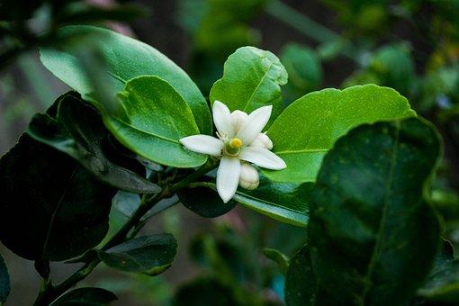 Garden, Plant, Flowers, Nature, Summer, Spring, Bloom