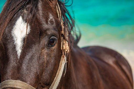 Horse, Horses, Mare, Head, Portrait