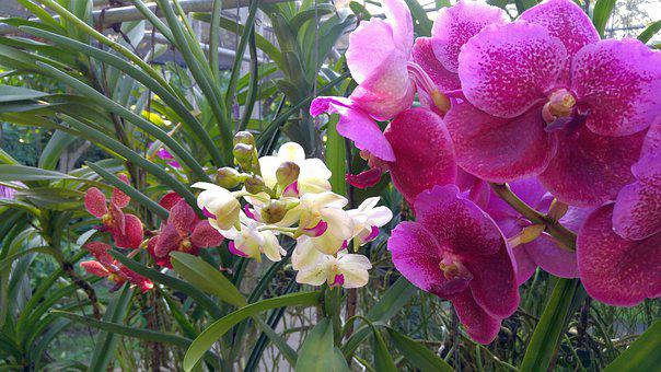 Orchid, Plant, Orchid Flower, Flower, Nature, Blossom