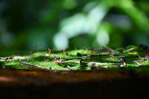 Grass, Ferns, Plant, Tree, Garden, Leaf, Forest, Summer