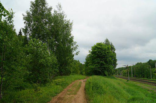 Forest, Silence, Nature, Landscape, Trees, Forests