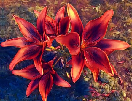 Red, Lillies, Bloom, Flower, Plant, Blossom, Nature