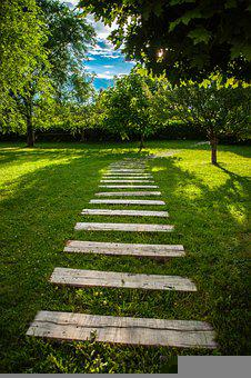 Path, Green, Nature, Forest, Environment, Trail, Grass