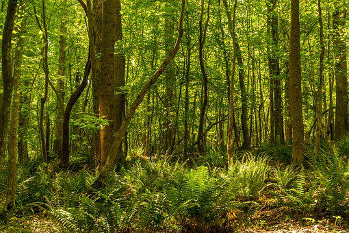 Forest, Spring Forest, Daylight Forest