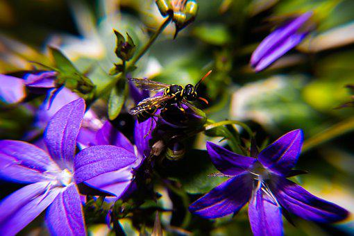 Pollen, Blossom, Insect, Spring, Fly, Stamen
