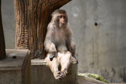 Monkey, Sitting, Relaxing, Animal, Zoo