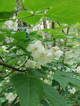 White, Branch, Flowers, Day, Blooms, Nature, Forest
