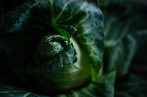 Cabbage, Vegetable, Veggie, Farm, Grocery, Food